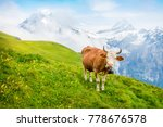 cattle on a mountain pasture.... | Shutterstock . vector #778676578