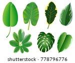 summer  spring leaves set.... | Shutterstock .eps vector #778796776