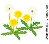 dandelion  vector illustration | Shutterstock .eps vector #778800406