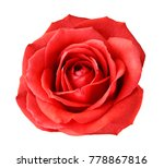 red rose on a white isolated... | Shutterstock . vector #778867816
