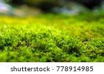 close up of freshness green... | Shutterstock . vector #778914985