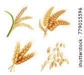 Agricultural Crops Set Rice ...