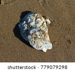 close up of shells on the beach | Shutterstock . vector #779079298