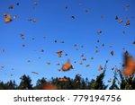 monarch butterflies in... | Shutterstock . vector #779194756