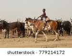 thirsty cows drinking in a... | Shutterstock . vector #779214172