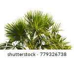 coconut or plam isolated on... | Shutterstock . vector #779326738