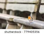 european robin  erithacus... | Shutterstock . vector #779405356