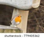 european robin  erithacus... | Shutterstock . vector #779405362