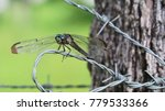 Dragonfly Sitting On A Barbed...