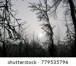 Barren Forest Trees Are Cast I...