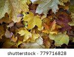 fallen leaves of maple. golden... | Shutterstock . vector #779716828