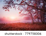 autumn nature. landscape of... | Shutterstock . vector #779758306