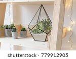 geometric glass florarium vase...   Shutterstock . vector #779912905