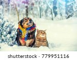 dog and cat sitting together... | Shutterstock . vector #779951116