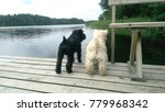 two dogs black and white on... | Shutterstock . vector #779968342
