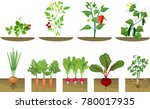 set of different vegetables... | Shutterstock .eps vector #780017935
