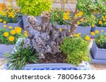 Rock Garden Arrangement In...