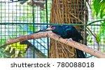 bird in the cage | Shutterstock . vector #780088018