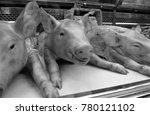 suckling pigs in butchers shop... | Shutterstock . vector #780121102