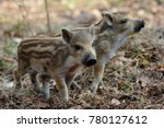 wild boar piglets in the forest ... | Shutterstock . vector #780127612