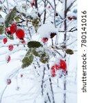 christmas fruit frozen hawthorn ... | Shutterstock . vector #780141016