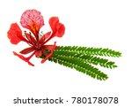 Gulmohar Flower In White...