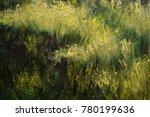 oil texture paintings  blur....   Shutterstock . vector #780199636