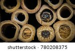 red mason bees   osmia bicornis ... | Shutterstock . vector #780208375