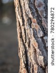 tree trunk with natural bark... | Shutterstock . vector #780296872