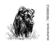 hand sketch bison. vector... | Shutterstock .eps vector #780308812