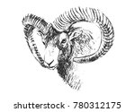 Hand Sketch Head Mouflon....