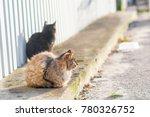 street wild homeless cat | Shutterstock . vector #780326752