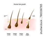 hair growth. anagen is the...   Shutterstock . vector #780338785