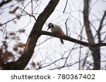 woodpecker in the forest. | Shutterstock . vector #780367402
