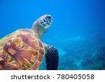 sea turtle closeup in blue...   Shutterstock . vector #780405058
