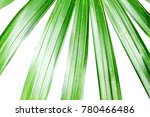 green leaves of palm tree on... | Shutterstock . vector #780466486