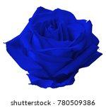 rose close up beautiful... | Shutterstock . vector #780509386