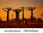 morondava madagascar october 7... | Shutterstock . vector #780545062