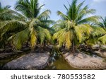 beautiful coconut palm trees... | Shutterstock . vector #780553582