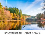 Forest Of Dean England