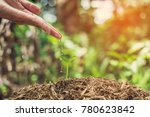seedlings are growing from... | Shutterstock . vector #780623842