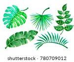 tropical plants watercolor... | Shutterstock . vector #780709012