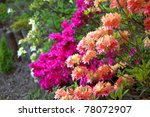 Group Of Azalea Flowers...