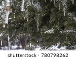 icicles on northern evergreen... | Shutterstock . vector #780798262