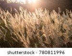 wild grass flower on golden... | Shutterstock . vector #780811996