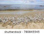 Hua Hin Beach Full Of Dead Fis...