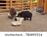 Small photo of Different animals at the feeding trough in the bestial kindergarten.