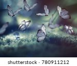 Huge Butterflies And The Littl...