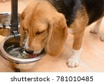 dog drinking water from a metal ... | Shutterstock . vector #781010485