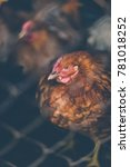 chickens on the farm. toned ... | Shutterstock . vector #781018252